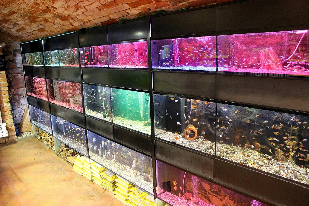 Akvária - prodejní nádrže